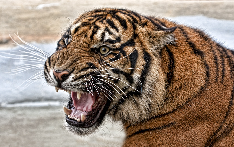 Photograph Fury by Val Saxby on 500px