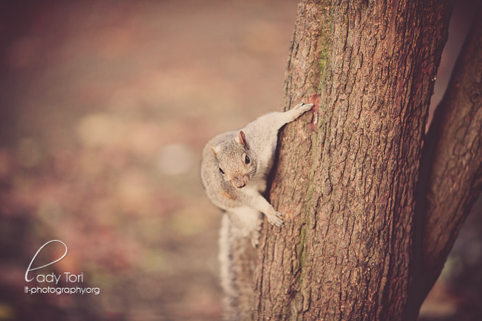 Photograph Hanging Around by Lady Tori  on 500px