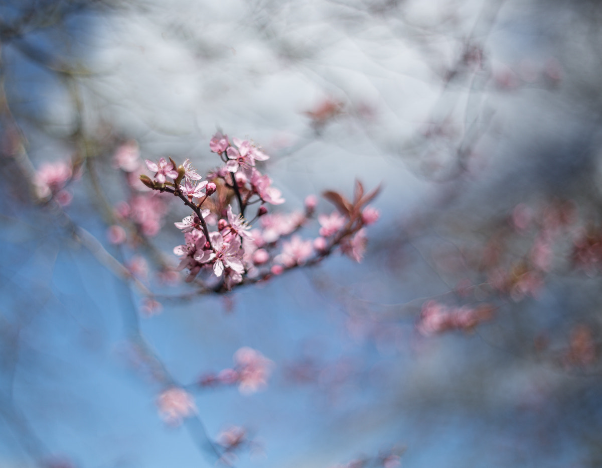 Photograph Spring Fever II by Penny Myles on 500px