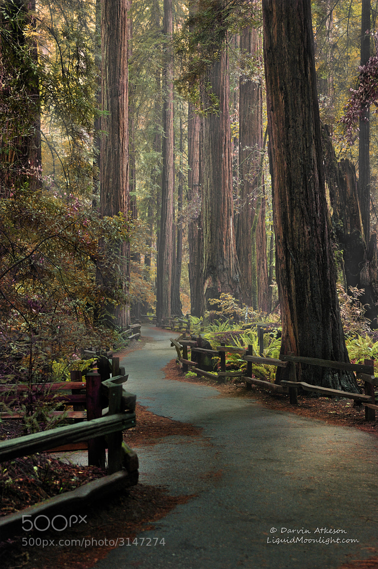 Photograph Ancient Redwood Forest  by Darvin Atkeson on 500px