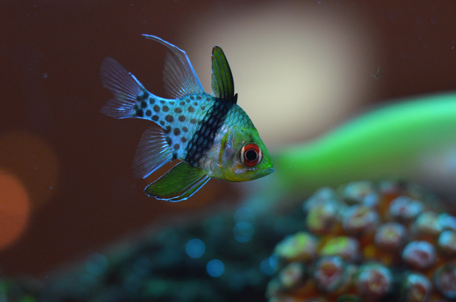 Photograph Marine Fish 9 by Khoo Boo Chuan on 500px