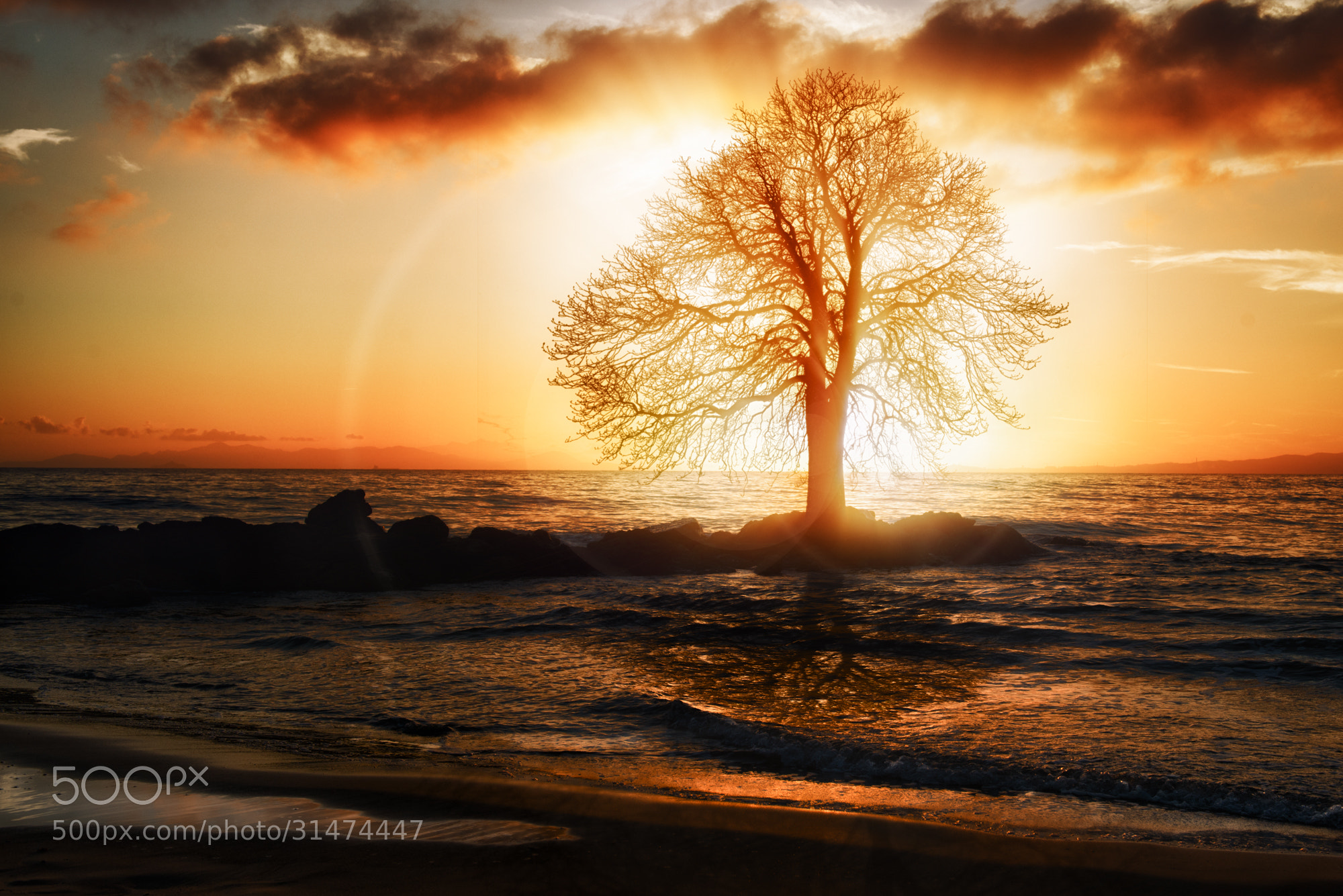 Photograph The Tree in the Sea by John Wilhelm on 500px
