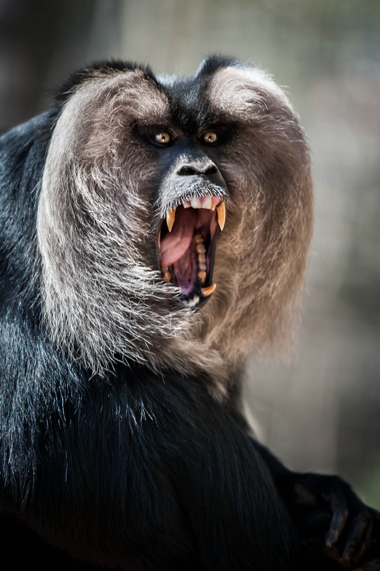 Photograph Scream by Justin Lo on 500px