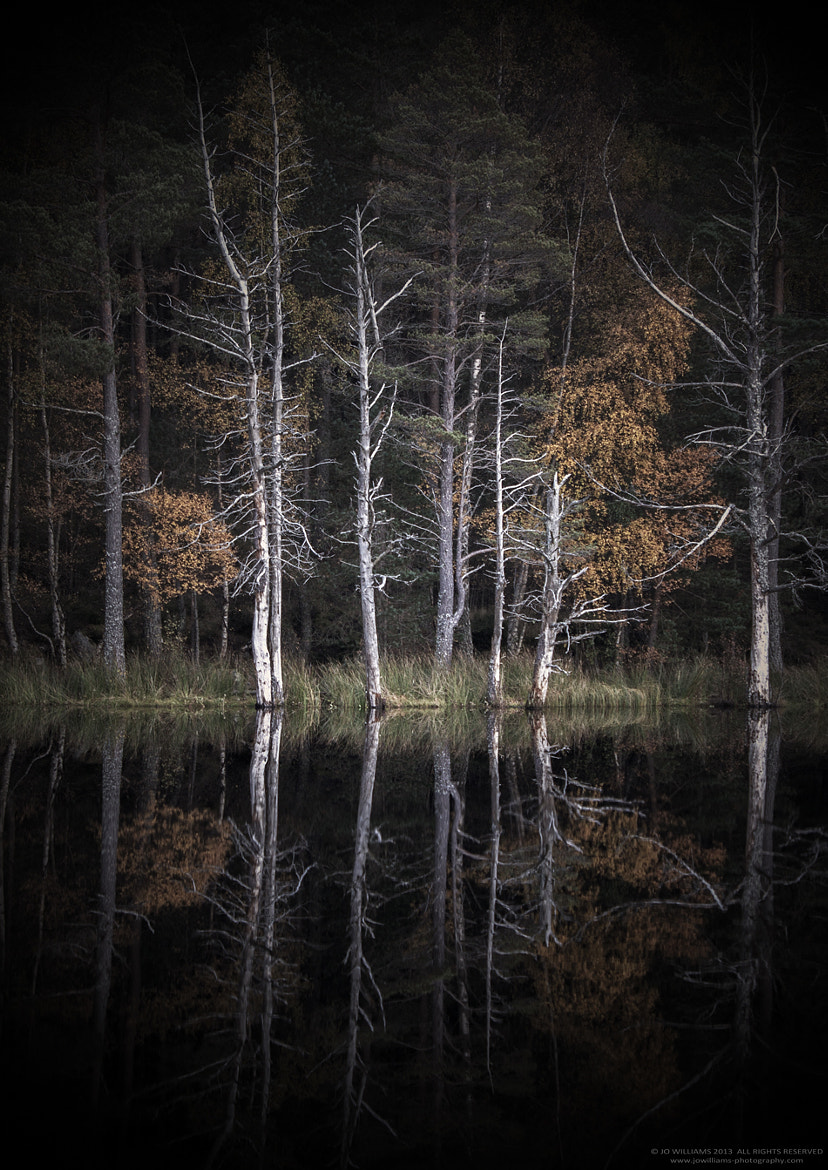 Photograph 442 by jo williams on 500px