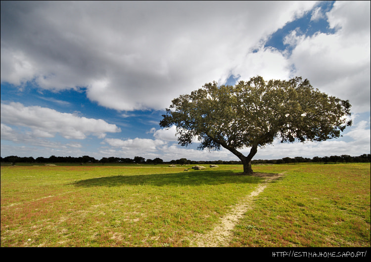 Photograph Just a tree by Tiago Estima on 500px