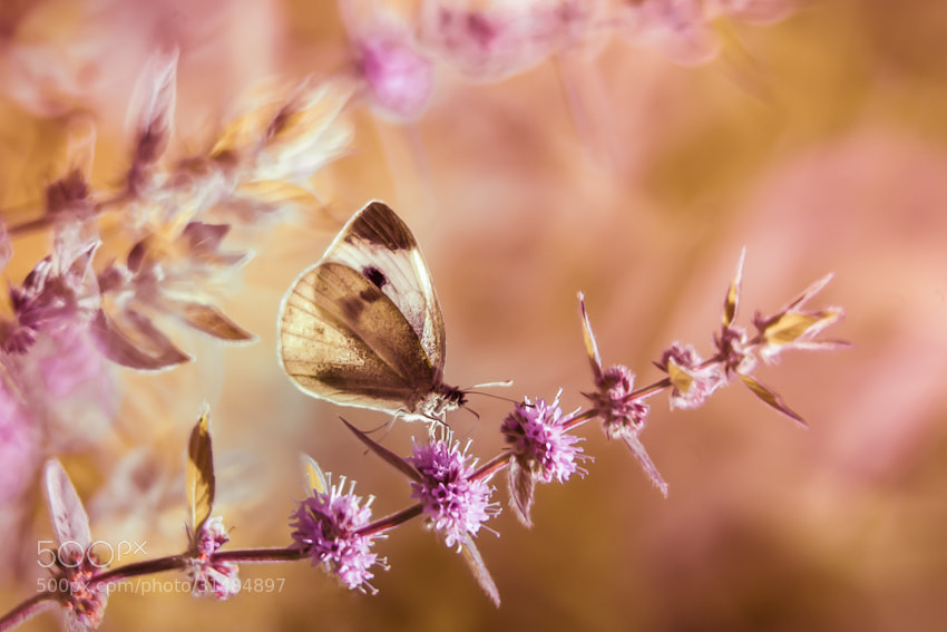 Photograph }i{ by Sylwia&Roman Zok on 500px