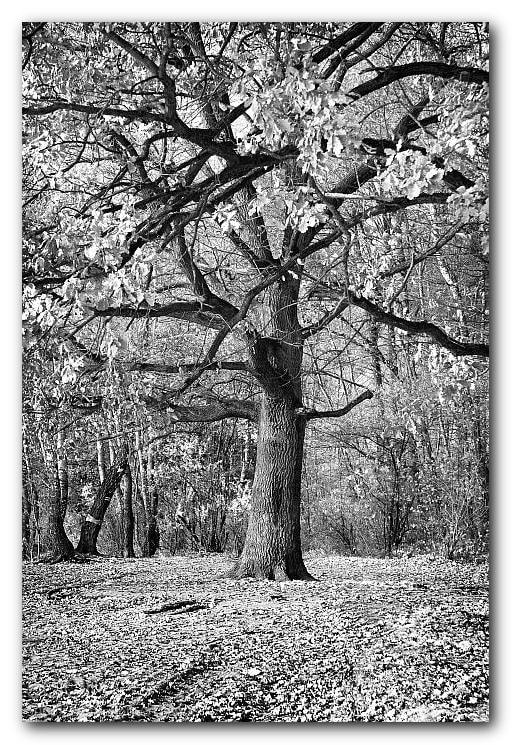 Photograph Digraph 10 by Danuta Antas Wozniewska on 500px