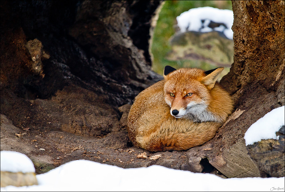 Photograph Firefox by Jan Geerk on 500px