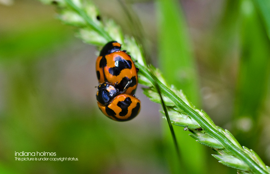 Photograph Ladybug Lover on tropical zone by INDIANA HOLMES on 500px