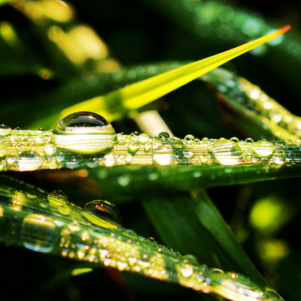 Photograph Raindrop by march SYL on 500px