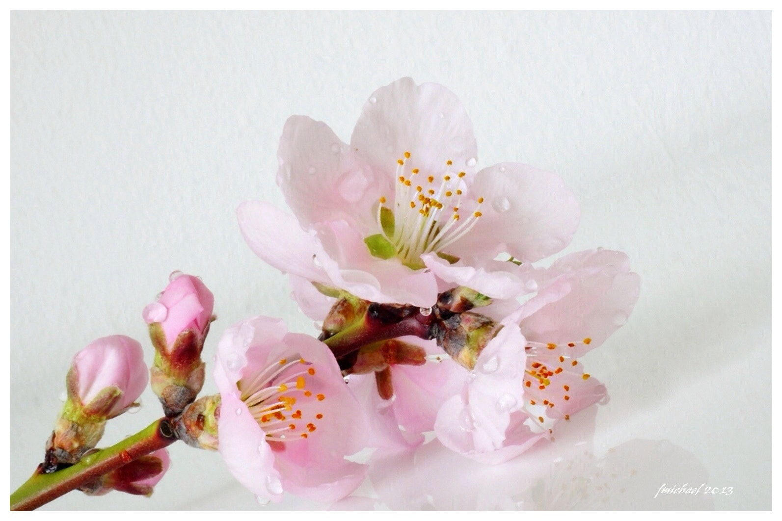 Photograph Almond blossom by Frank Michael on 500px