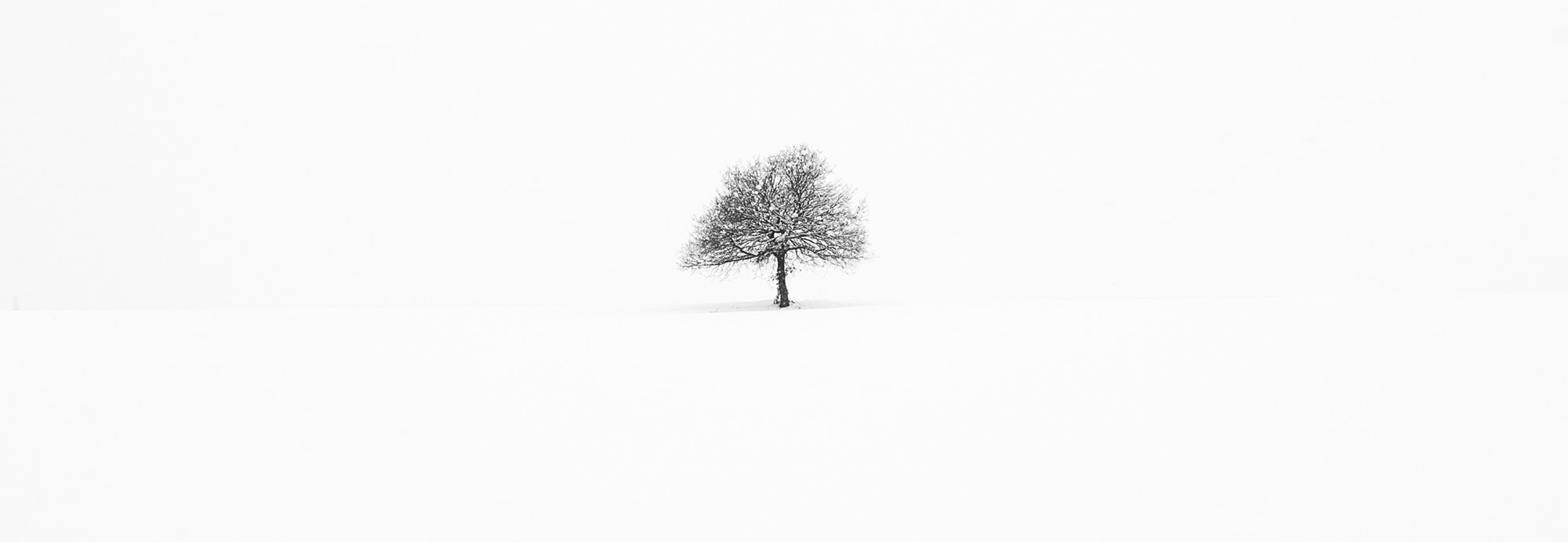Photograph my tree.... by Cristiano Tortone on 500px