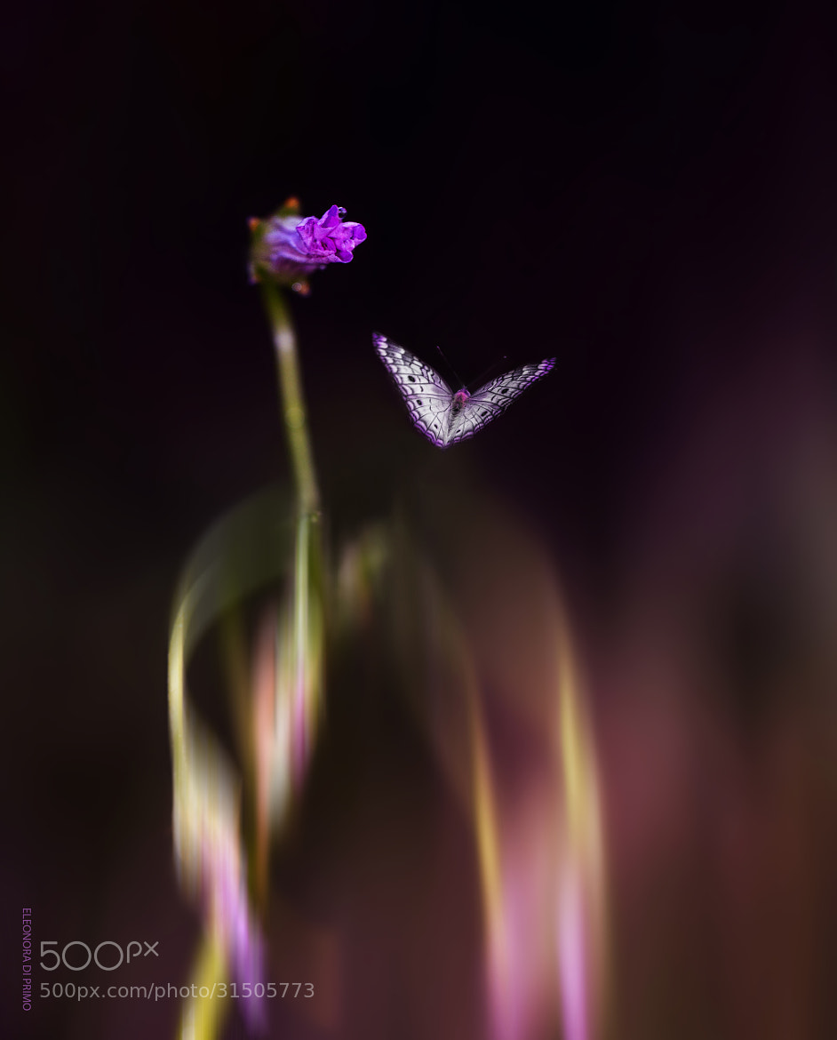 Photograph Living together...Flying alone... by Eleonora Di Primo on 500px