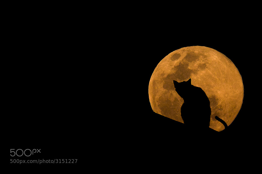 Photograph The Cat & The Moon by Mario Moreno on 500px