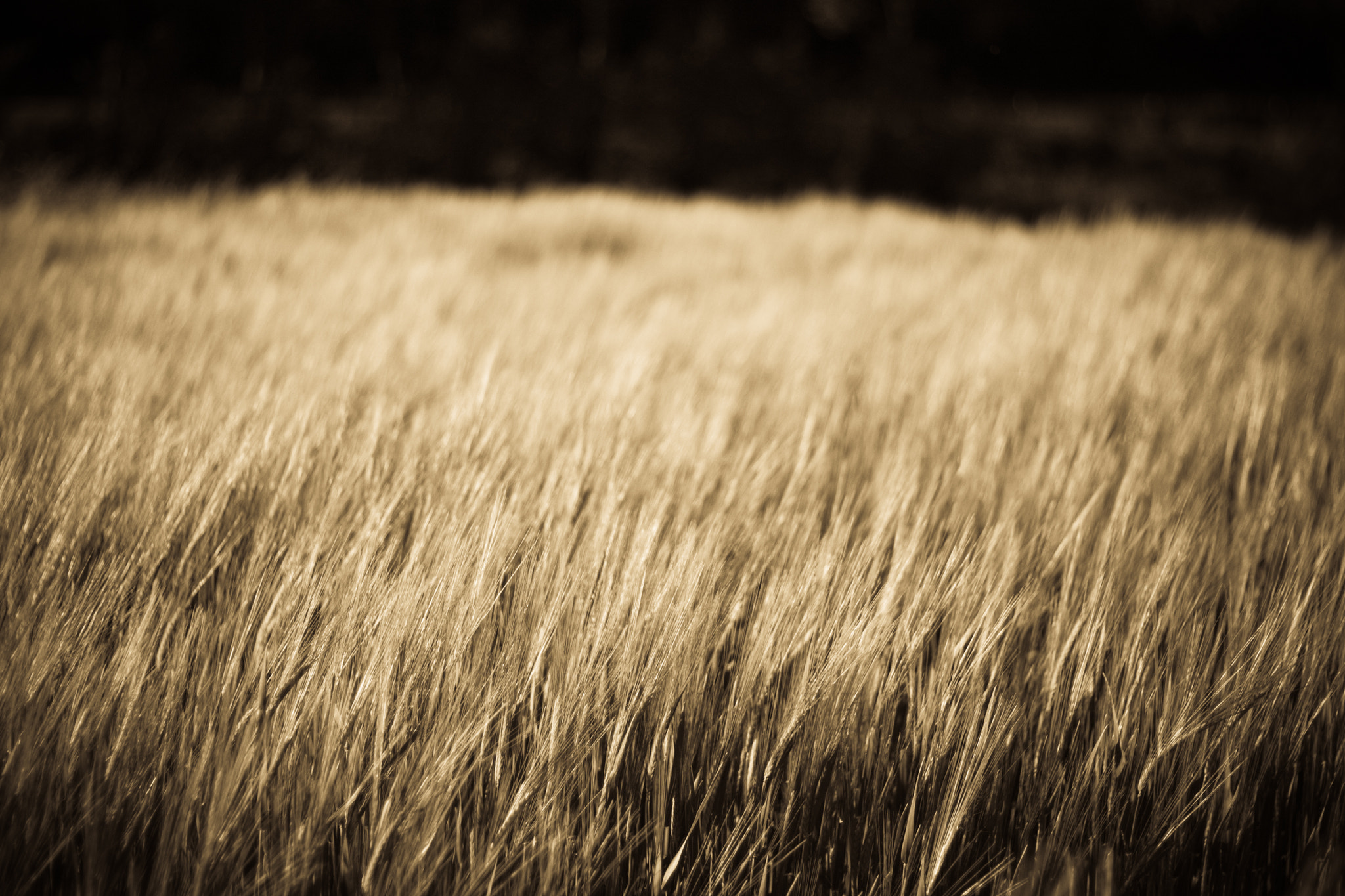 Photograph Grass by Christian Schuster on 500px
