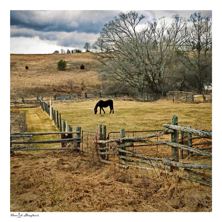 Last Horse