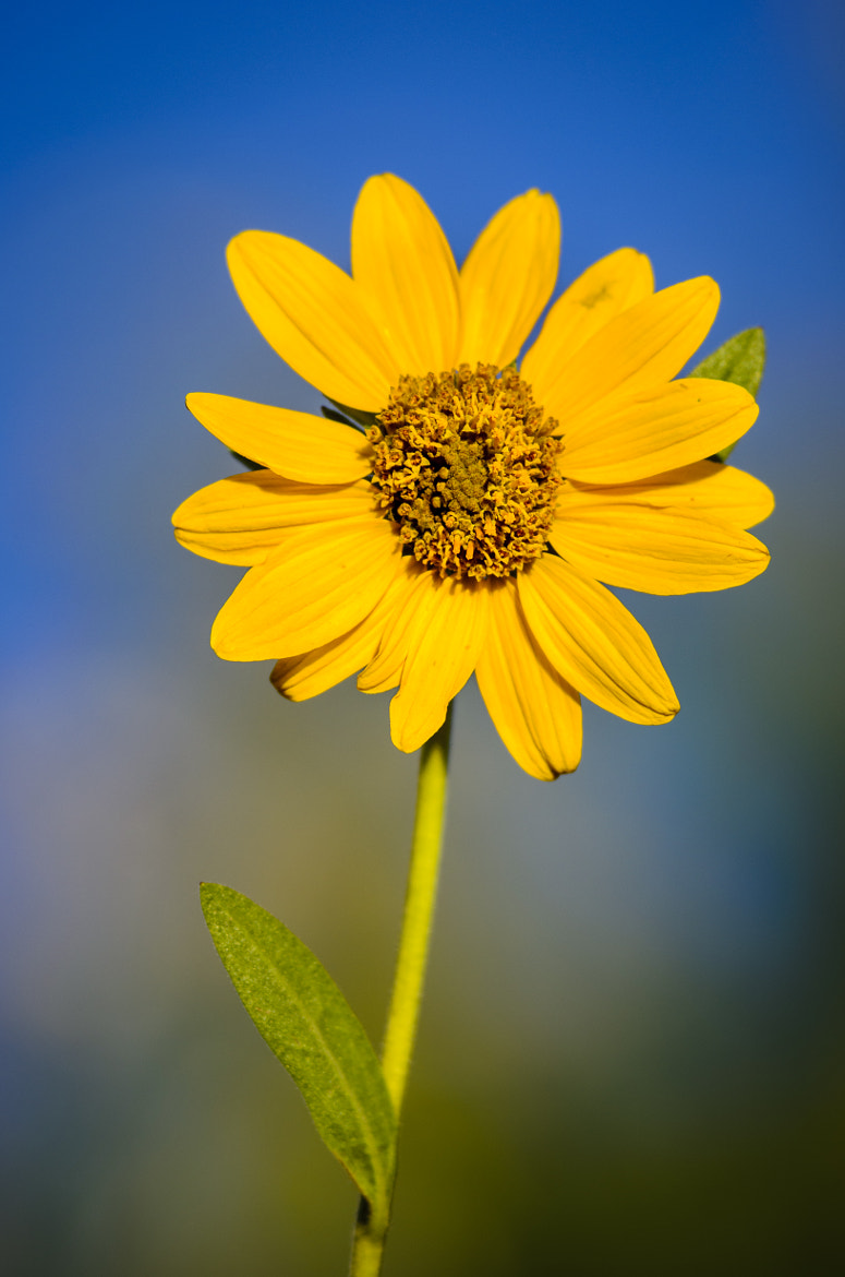 Photograph Sunshine by Rusty Parkhurst on 500px