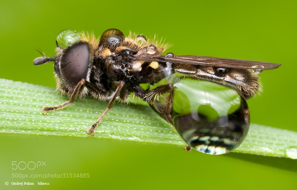 Photograph Green by Ondrej Pakan on 500px