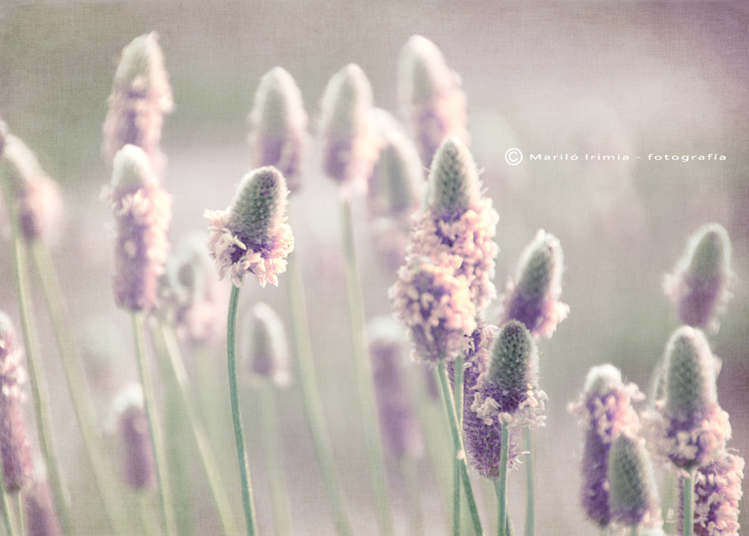 Photograph Floral dawn ... by Mariló Irimia on 500px