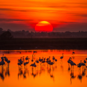 SUNSET AND FLAMINGOS