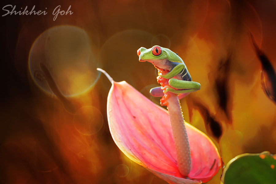 Photograph Holding Tight by shikhei goh on 500px