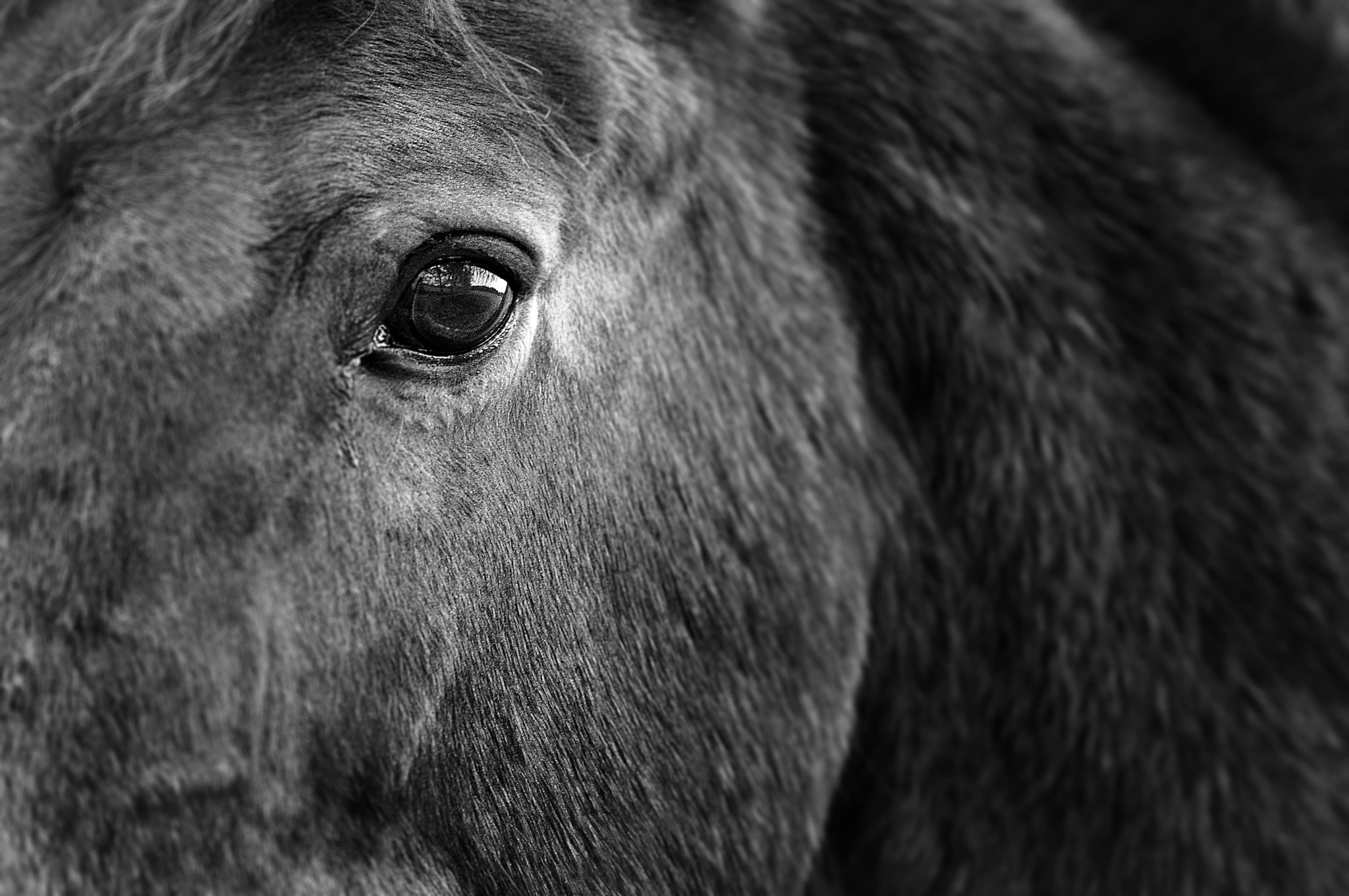Photograph Eye of the Beast by David Havenhand on 500px