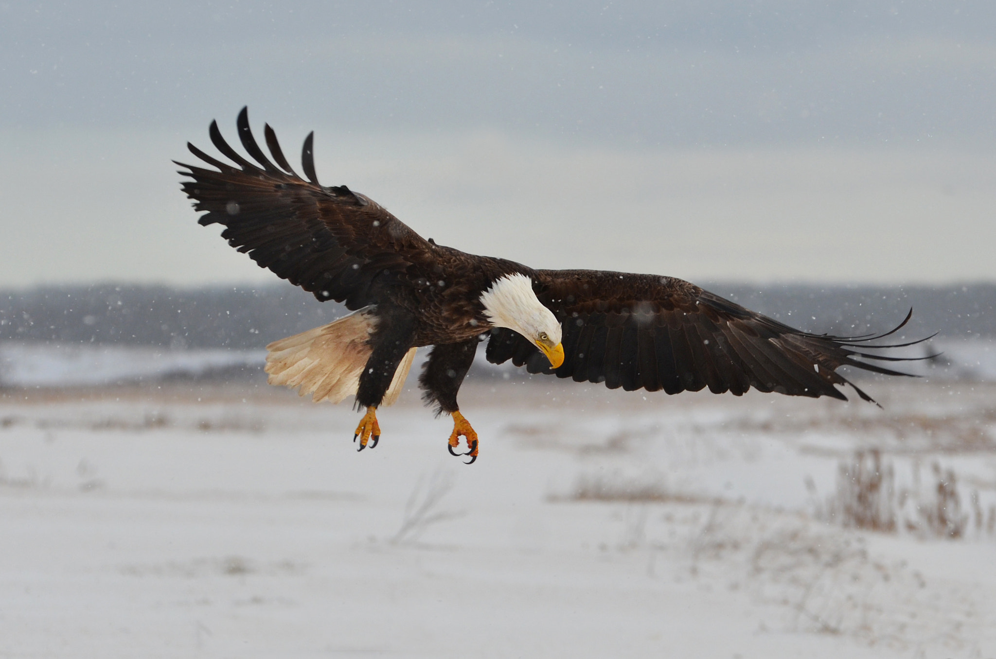 Photograph Snowfall Landing by Peter Brannon on 500px