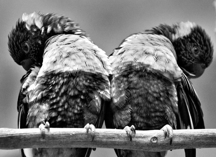 Photograph Birds Three by Esten Hurtle on 500px