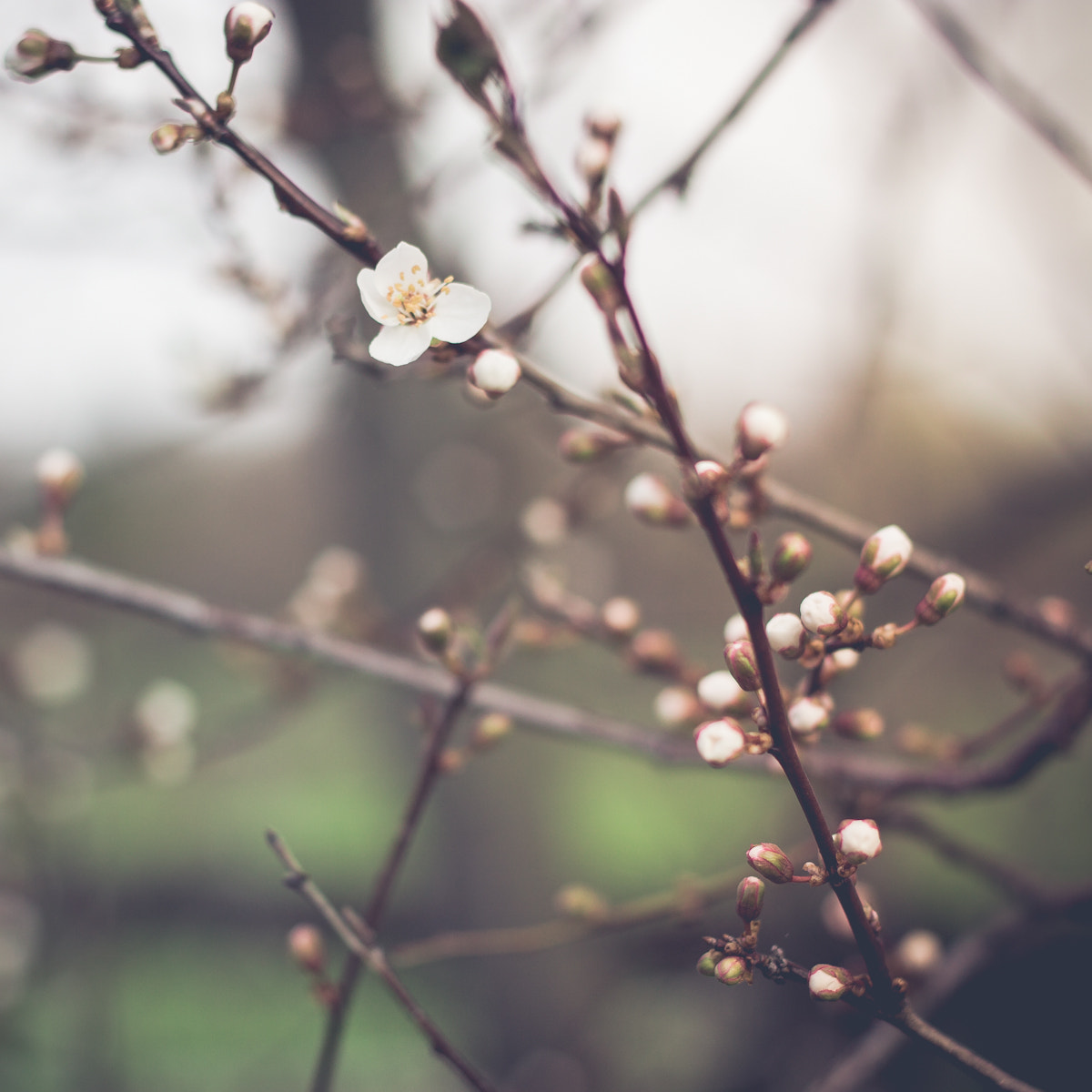 Photograph spring by Andrea Schunert on 500px