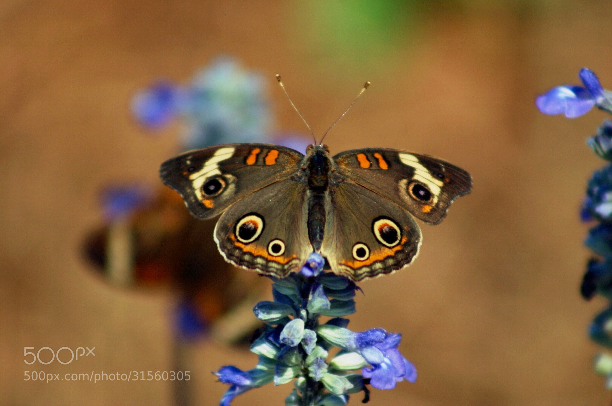 Photograph Eyes by FiveBummelBees on 500px
