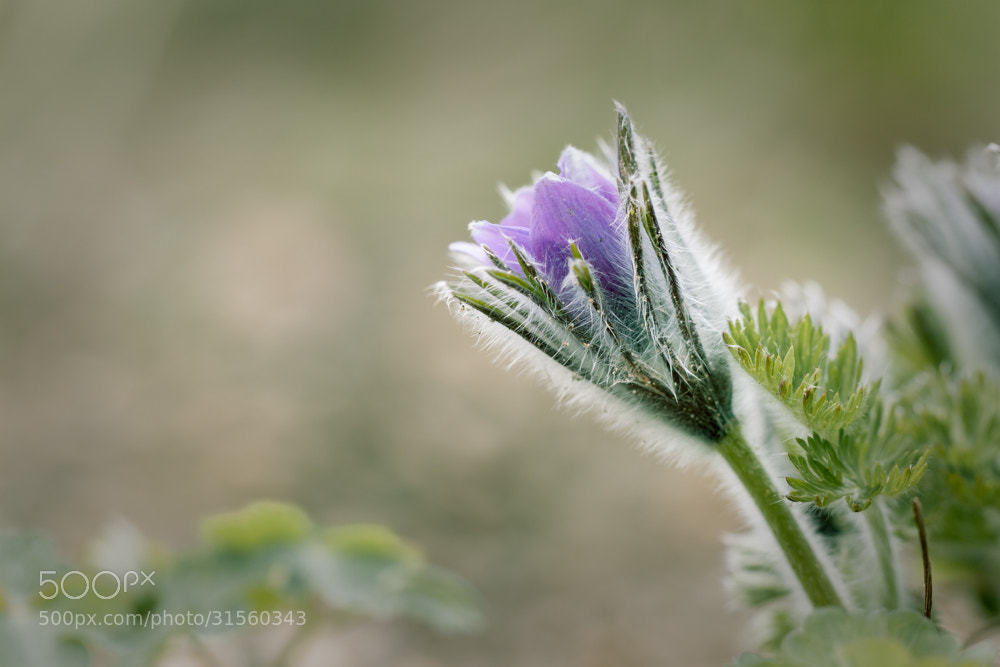 Photograph soft by Marion Fanieng on 500px