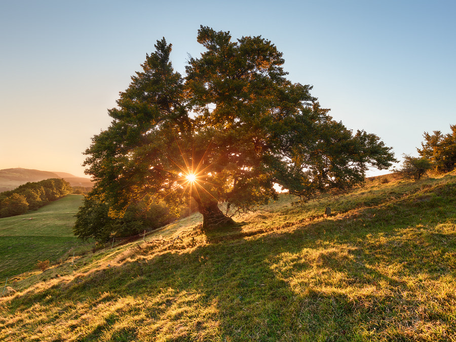 Photograph Sun Tree by Michael  Breitung on 500px