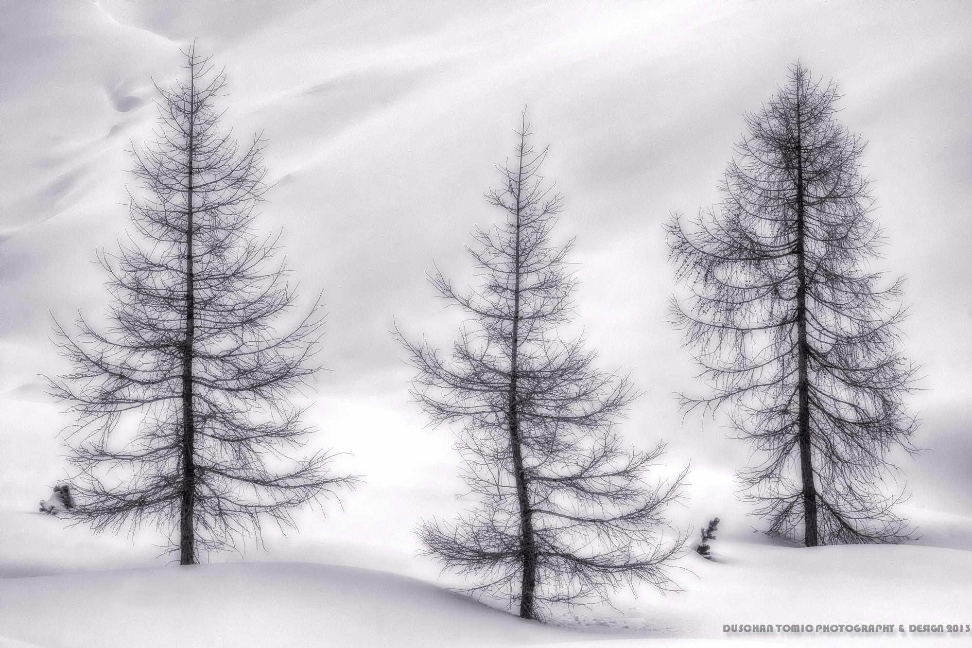 Photograph WE ARE NOT CHRISTMAS TREES! by Duschan Tomic on 500px