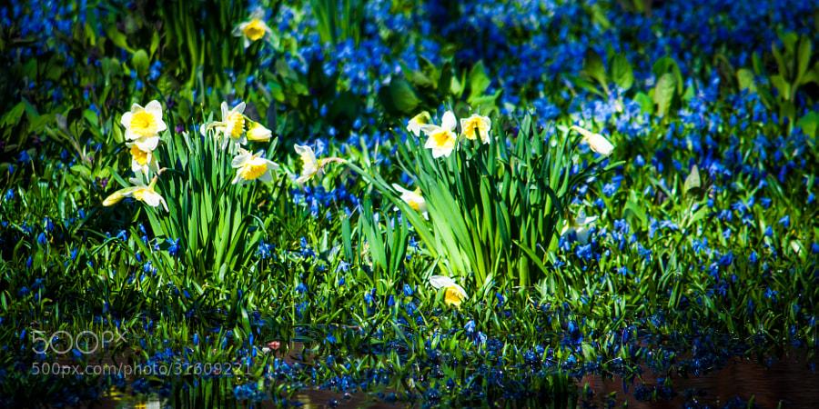 Spring is full of odd mixtures--cold, heat, light, dark, sun and rain.