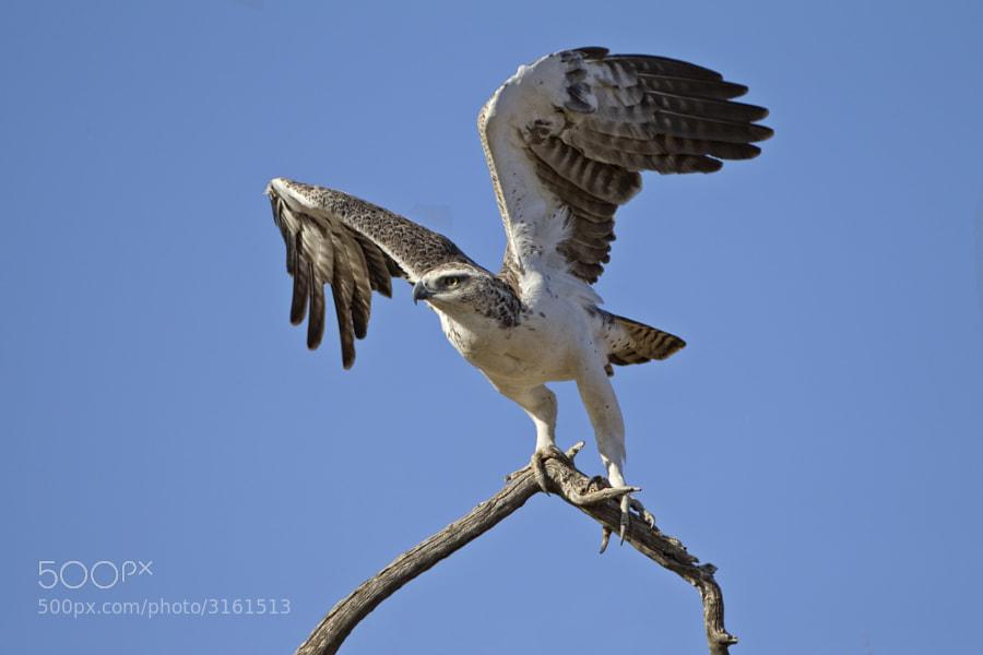 Taken in Etosha National Park, Namibia