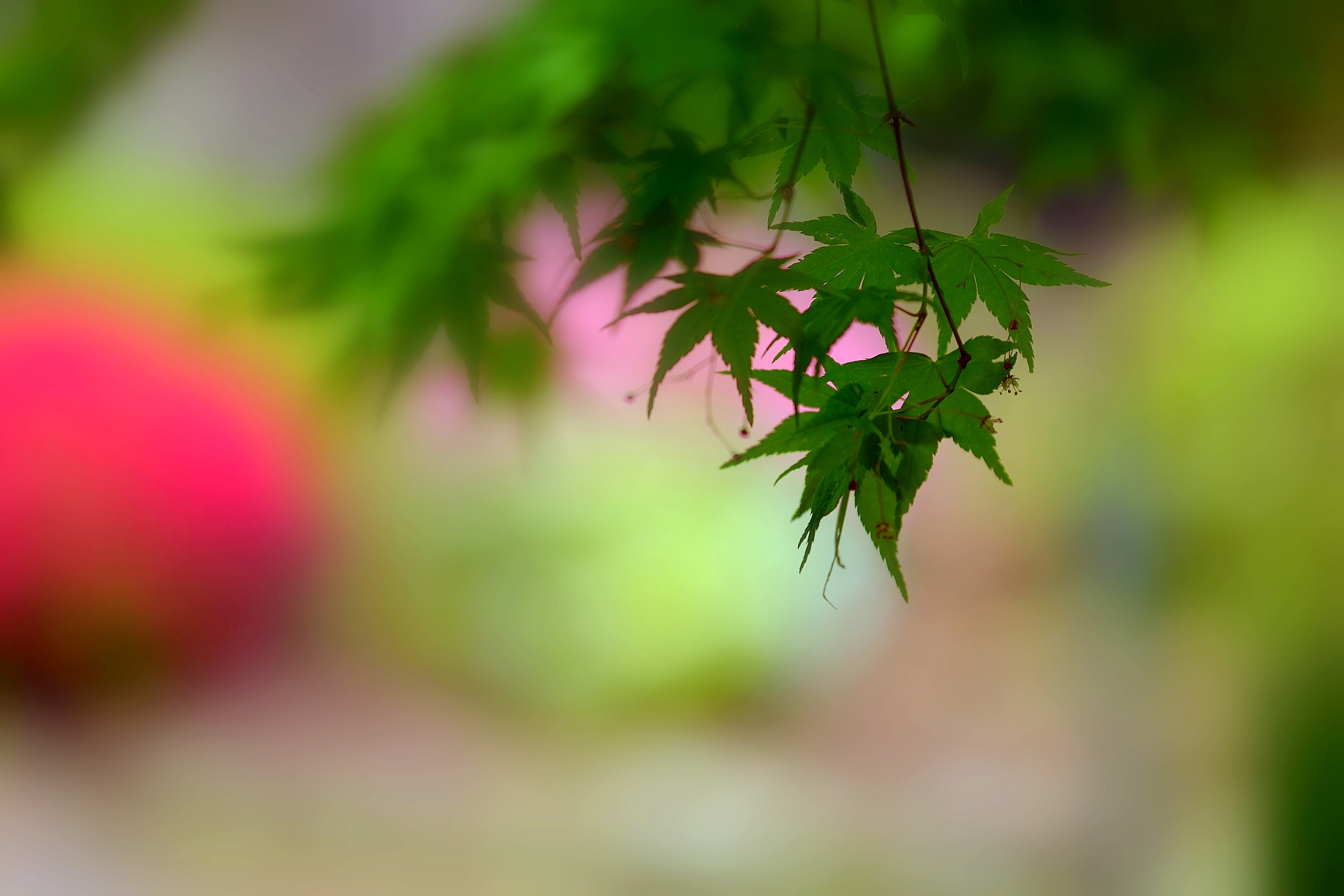 Photograph The season of fresh green by yoshi 馬場 on 500px