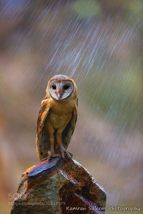 Photograph Raining.. by Kamran Saleem on 500px