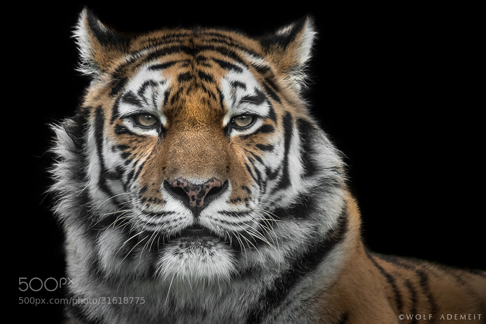 Photograph wild at heart by Wolf Ademeit on 500px