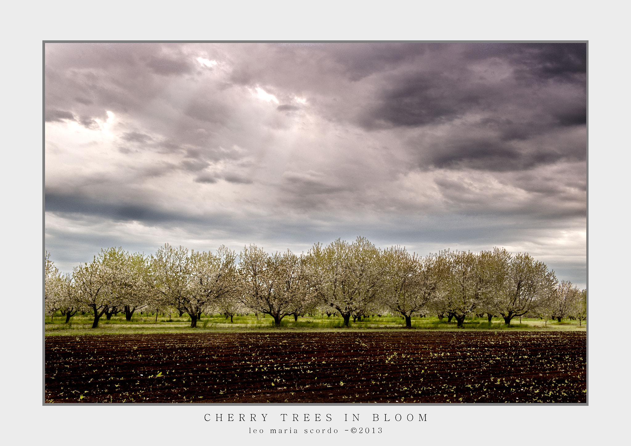 Photograph CHERRY TREES IN BLOOM by Leo Maria Scordo on 500px