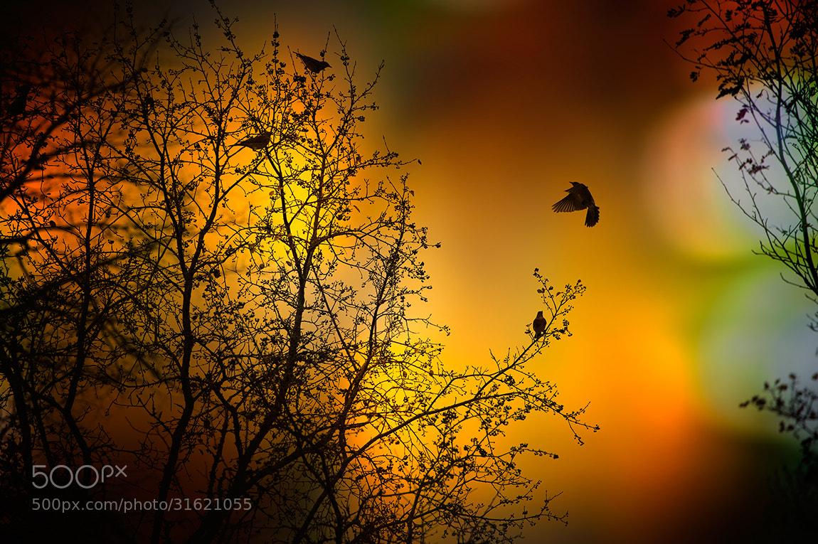 Photograph the thorn birds vol.2 by Marek Czaja on 500px