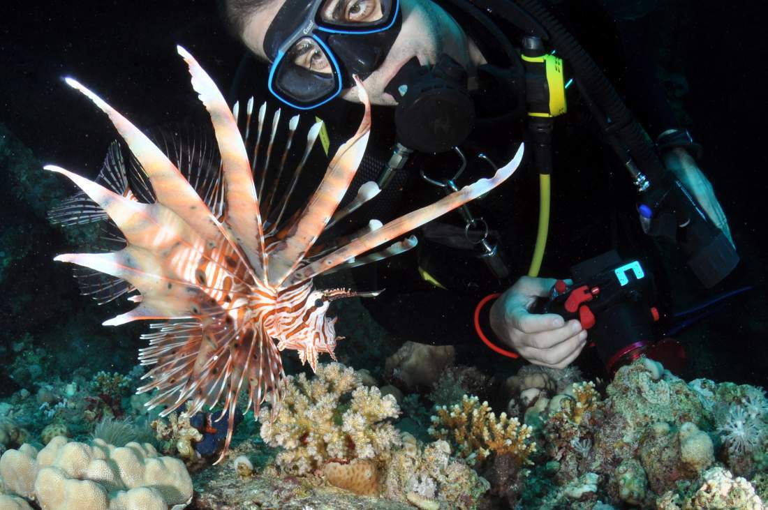 Photograph Lion Fish and the Diver by ColorsofOceans on 500px