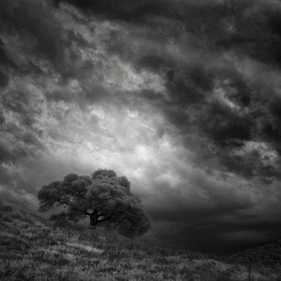 Photograph The Photographer's Tree  by Nathan Wirth on 500px