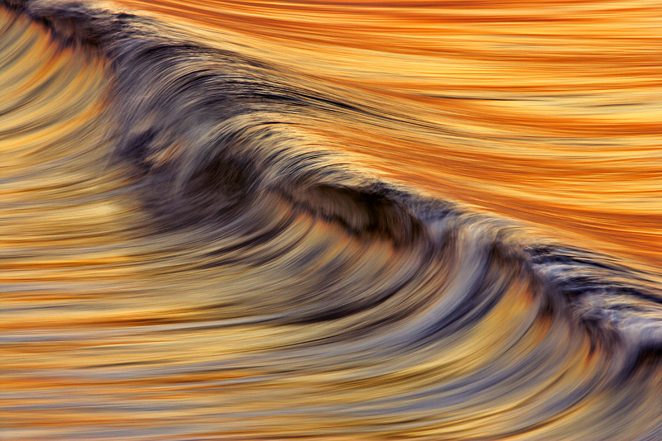Photograph C6J7800  Golden Wave by David Orias on 500px