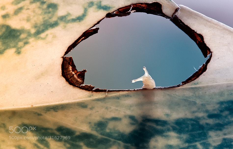 Photograph 'V' by Heri Wijaya on 500px