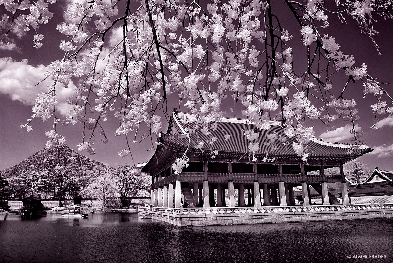 Photograph Spring Break in Seoul by Almer  Frades on 500px