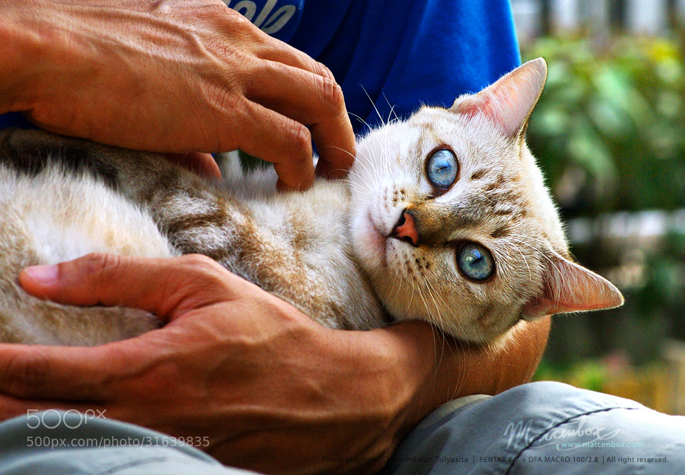 Photograph Cat in the arms by Matcenbox  on 500px
