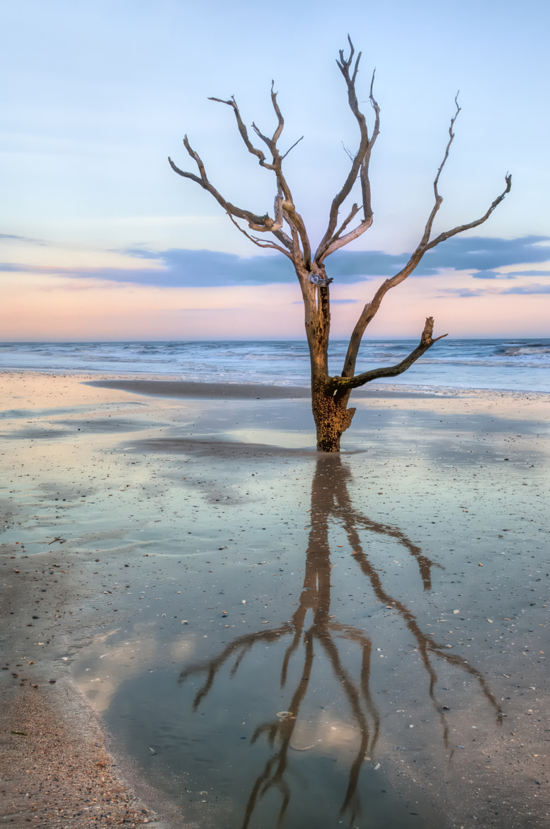 Photograph The Lonesome Tree by JHRphotoART . on 500px