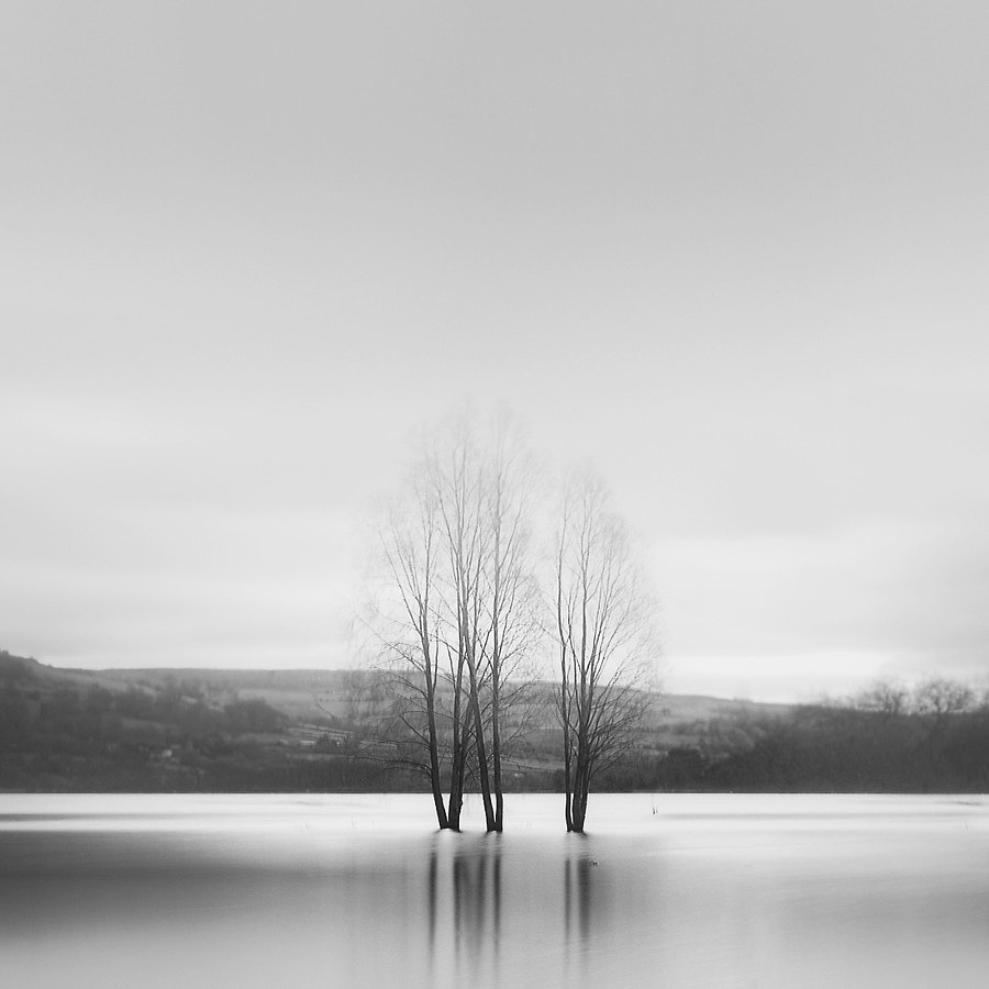 flooded trees in Llangorse lake, Breacon Becons