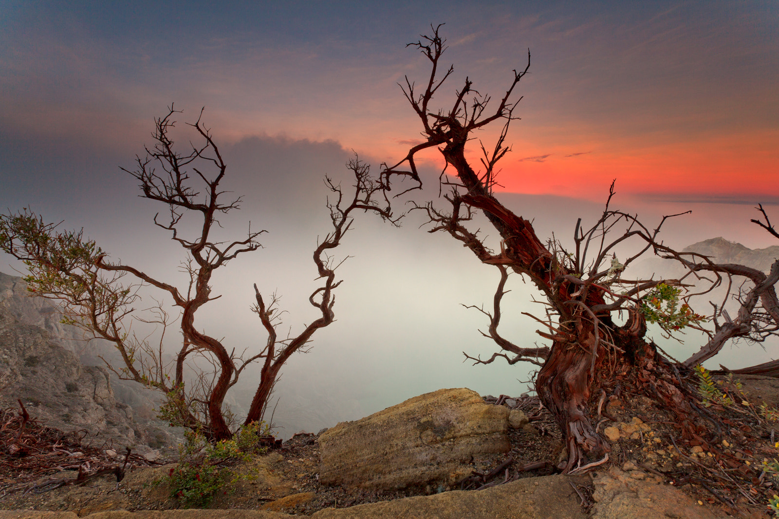 Photograph Death Trees by Helminadia Ranford on 500px