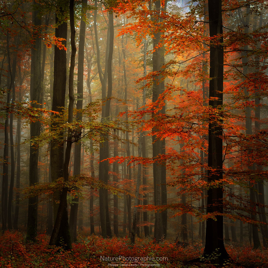 Photograph Fall by Philippe Sainte-Laudy on 500px